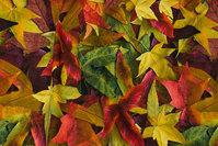 Bomuldsjersey med efterårsblade i gyldne og røde nuancer