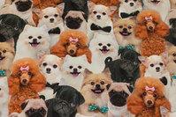 Bomuldsjersey med masser af hunde