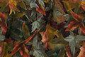 Bomuldsjersey med efterårsblade i grå og bordeaux nuancer.