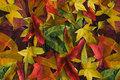 Bomuldsjersey med efterårsblade i gyldne og røde nuancer.