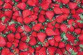 Bomuldsjersey med flotte jordbær.