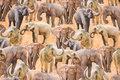 Beige bomuldsjersey med masser af elefanter.